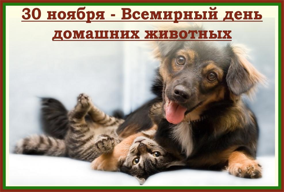 Сегодня 30 ноября всемирный день домашних животных