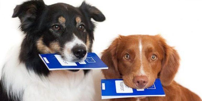 Принят закон о домашних животных. Надо ли чипировать своих собак и кошек?