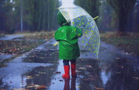 Как сообщил Вильфанд — на этой неделе будет осенняя погода и монотонные, холодные осенние дожди